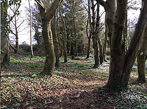 The Hill Cottage woodlands